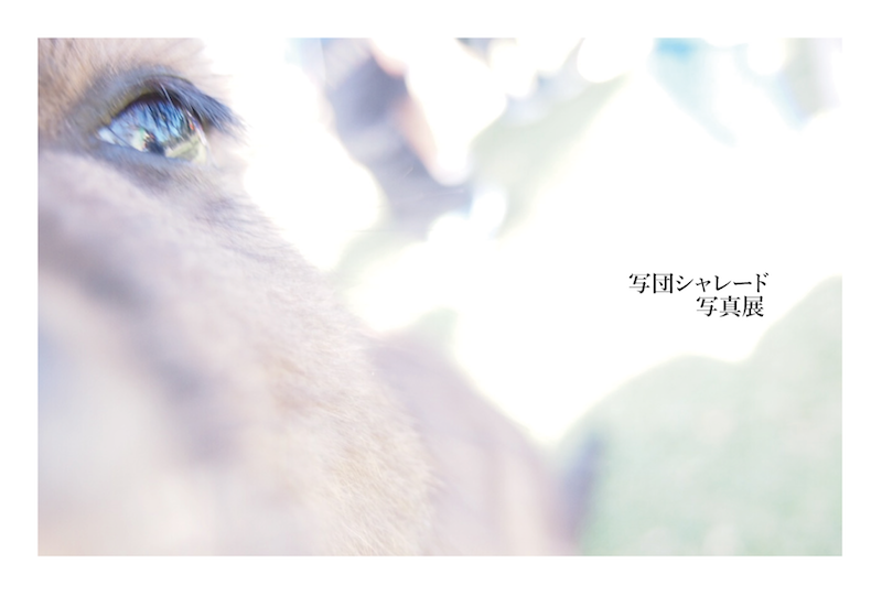 早稲田祭展 (2014年11月)